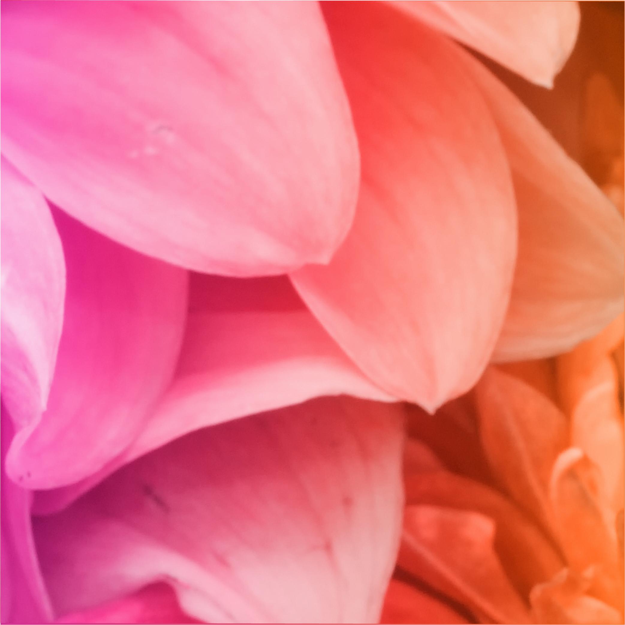 BloomStudio Thumbnail